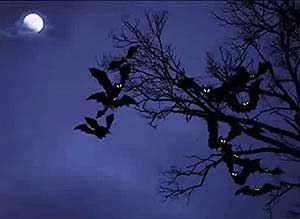Imagen de Halloween para compartir gratis. Se viene la noche...