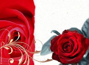 Tarjetas Con Mensajes De San Valentin Para Compartir Ideas Para Tu