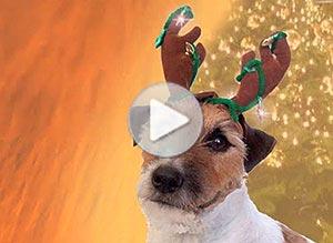 Imagen de Navidad para compartir gratis. Ladridos navideños