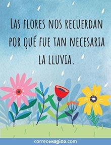 Las flores nos recuerdan por qué fue tan necesaria la lluvia.